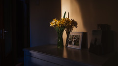 02.04.2018 (Fregoli Cotard) Tags: beautifullight beautifulsunset myhomebeautiful light goldenlight awakethelight daffodils daffodil floral spring springflowers yellowflowers framed photos night dailyjournal dailyphotography dailyproject dailyphoto dailyphotograph dailychallenge everyday everydayphoto everydayphotography everydayjournal aphotoeveryday 365everyday 365daily 365 365dailyproject 365dailyphoto 365dailyphotography 365project 365photoproject 365photography 365photos 365photochallenge 365challenge photodiary photojournal photographicaljournal visualjournal visualdiary 92365 92of365