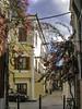 Nauplia, Greece (Tony Tomlin) Tags: greece mediterranean peloponnese argolis epidavros flowers shutters