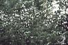 2011 03 10-09.44.46 (Hüseyin Başaoğlu 3) Tags: nikond300s afsnikkor18200mmf3556vriiifed hüseyinbaşaoğlu huseyinbasaoglu biga pegai çanakkale dardanel turkei turquie türkiye