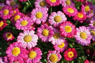 春の等々力不動尊の花壇