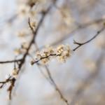 Spring has sprung! :-) thumbnail