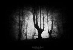 Nightmare (Mimadeo) Tags: scary dark fog forest nightmare horror fear mood moody landscape magic tree shadow light evening nature night mystery mist spooky foggy darkness misty halloween woods creepy fantasy gothic mysterious silhouette enchanted ghost atmosphere atmospheric bare haunted black white blackandwhite grunge grungy textures texture textured