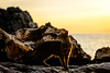 Early Riser (George Plakides) Tags: capegreco havogreko cat sunrise rocks sea
