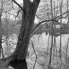 superikonta532003 (salparadise666) Tags: zeiss ikon super ikonta 53216 opton tessar 80mm fuji neopan acros vintage folding medium format analogue film camera nils volkmer 6x6 square bw black white monochrome landscape nature rural trees hannover region niedersachsen germany north german plains lowlands