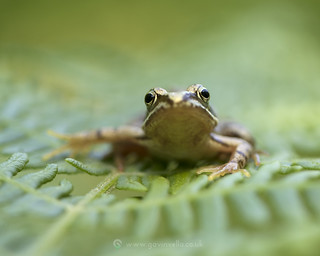 Froglet Face 23rd May