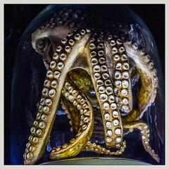 Pieuvre / Octopus - Serena Carone - Musée de la Chasse / Hunting museum - Paris (christian_lemale) Tags: serena carone serenacarone sculpture plasticienne plastic artist musée museum chasse hunting paris france nikon d7100 pieuvre octopus