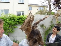 DSC07690 (guyfogwill) Tags: 2018 bethfogwill birds brandonsbirthday devon eurasianeagleowl gbr guyfogwill may owls paignton unitedkingdom paigntontorquay