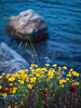 Spring Time (Giovanni C.) Tags: cf090279 mamiya mediumformat mf nohdr 645 mediumformatdigital afd digitalback digital 6x45 mamiya645 645af 645afd gcap giovannic phaseone df