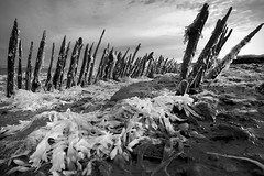 Carcass, Cliffe, Kent (Sean Hartwell Photography) Tags: infrared ir thamesestuary thames kent england decay derelict dead desolation deserted groynes postapocalyptic sea seaweed saxoncoast cliffe