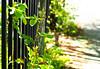 Greens Growing thru the Fence (Orbmiser) Tags: olympus40150mmf4056r 43rds em1 mirrorless omd olympus ore oregon portland sidewalk fence bushes leaf leaves
