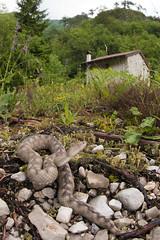 Vipera ammodytes (Gabriele Carabus Motta) Tags: nose horned viper snake reptile herping mountain nature spring wildlife