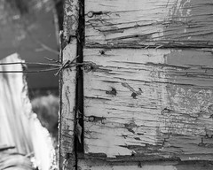 IMGP2160 (agianelo) Tags: weathered wood peeling paint wire monochrome bw blackandwhite
