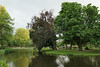 Peaceful afternoon in Vondelpark, Amsterdam - Explore! (Monceau) Tags: vondelpark publicpark trees lake peaceful amsterdam park tree explore explored 142365 365picturesin2018 365the2018edition 3652018 day142365 22may18