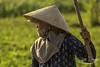 0S1A4320 (Steve Daggar) Tags: vietnam candid portrait rural farmer farm agriculture hoian