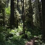 Salmon River Trail thumbnail