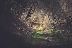 This way (Chloé +++) Tags: mountain trees green tree arbres forest walk chemin vert dof depthoffield profondeur de champs hiver way pyrénées france occitanie landscape paysage canon eos400d forêt dream