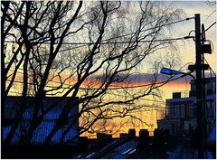 Silhuettes in sunset (Marie Helèn) Tags: silhuettes tree sunset cityscape cables sky colors snow winter winterlight canon rodelökka oslo oslove 24105mm