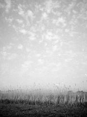 Reed (25/8) Tags: olympus pen ee2 agfaphoto apx100new apx100 ilfotecddx ilfotec egmond