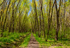 Take the Long Way Home (Kevin Tataryn) Tags: path woods forest trees trail green grow growth nikon 1755 d500