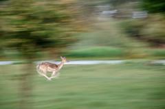 AWD on the run (eduardstegeman) Tags: dear run blur fast awd