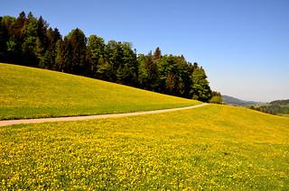 Prairie jaune  -  Yellow meadow