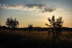 Das erste Licht des Tages (Traumfotos Trautmann) Tags: hemer morgendämmerung morgenlicht panzerübungsgelände sonnenaufgang sonyrx100 steinbruch truppenübungsgelände morgens natur umwelt baum bäume himmel wolke wolken kompaktkamera deilinghofen panzergelände gegenlicht sauerland