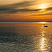 Into The Light (cindiefearnall) Tags: swan seascape sunrise dawn sky muteswan georgianbay greycounty goldenhour meafordontario silhouette reflection shoreline landscapephotography naturephotography nature