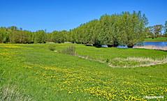 Landschaft (garzer06) Tags: himmel grün landschaft wasser baum gras blau deutschland landschaftsbild mecklenburgvorpommern üselitz landschaftsfoto landscapephotography naturphotography landscapephoto naturfotografie naturfoto inselrügen landschaftsfotografie insel naturephotography rügen