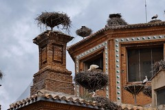 Les cigognes d'Alfaro, Ribera d'Ebre, Navarre (thierry llansades) Tags: alfaro navarra navarre oiseau cigogne cigognes cigogna tudela aragon tudele saragosse zaragoza colegiale collegiale eglise chapelle ebre ebro ribera pamplona pampelune nid