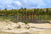 On Anakena beach / На пляже Анакена (Vladimir Zhdanov) Tags: travel chile polynesia rapanui easterisland anakena sky cloud beach sand tree grass moai sculpture ancient ahunaonao