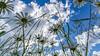 Perspektiefe (Fotocrossi) Tags: siegerland sommer summer perspektive weitwinkel nrw netphen natur nature naturephotography deutschland samyang12mm samyang salchendorferhöhe