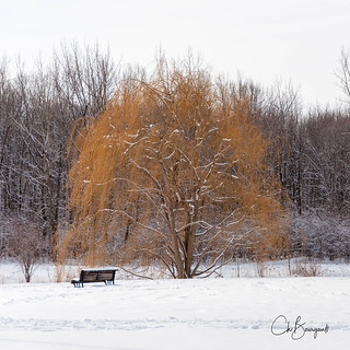 2018-03-11_Parc_Angrignon-1.jpg
