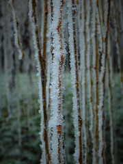 Iced stripes (audreydesveaux) Tags: hiver givre nature