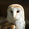 Ronnie, Brid Birds of Prey (barbaralansdell) Tags: trees daffodils kookaburra owl squirrel falcon