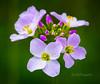 FRÜGLINGSIMPRESSION (K&S-Fotografie) Tags: beauty blossom bud blume park spring beautiful yellow makro pflanze hell