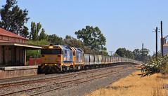 8164 and BL26 rumble through Horsham yard on 7734V grain train (bukk05) Tags: 8164 railpage:class=47 railpage:loco=8164 rpaunsw81class rpaunsw81class8164 bl26 81class blclass bobhawke wimmera westernstandardgaugeline wagons wheat 7734v explore export engine emd electromotivediesel emd16645f3b emd16645e3b emd16645e3 railway railroad railpage rp3 rail railwaystation railwaystations ruralcityofhorsham train tracks tamron tamron16300 trains yard photograph photo pn pacificnational pnruralbulk loco locomotive jt26c2ss horsepower hp horsham grain graincorp flickr freight diesel station standardgauge sg 2018 australia artc autumn canon60d canon clyde clydeengineering victoria vr victorianrailway vline victorianrailways mainline