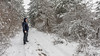 Admiring the silence (Milen Mladenov) Tags: 2018 bulgaria landscape montana earlyspring forest latewinter nature season snow spring tree walk winter
