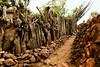 Konso Walled Village (Rod Waddington) Tags: africa african afrique afrika äthiopien ethiopia ethiopian ethnic etiopia ethnicity ethiopie etiopian omovalley omo outdoor omoriver outdoors walled village rock timber historical historic history gamole unesco