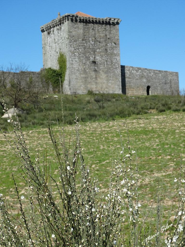 Águas Frias (Chaves) - ... a giesta branca e o castelo de Monforte de Rio Livre (Monumento Nacional) ...