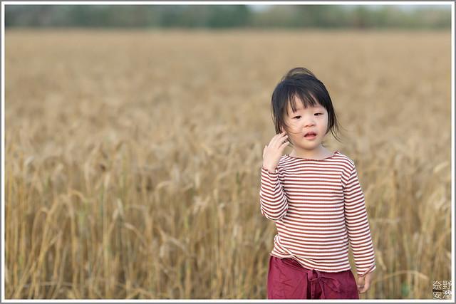 3月台南 親子寫真可以這樣拍 木棉花 蜀葵 小麥 一次讓你拍個夠 (65)