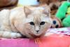 Luna (davidmartinezcarpintero) Tags: gato mascota cat pet animal felino domestico