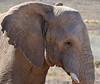 Stonehead (Vide Cor Meum Images) Tags: mac010665yahoocouk markcoleman markandrewcoleman videcormeumimages vide cor meum images elephant south africa game drive wild aquila reserve