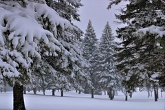 April snow continues. The winter that won't end? (BreezyWinter) Tags: aprilsnow spring easter orthodoxeaster christians