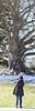 042118 Mount Auburn Cemetery Beech Scillia Kate Pan-2 (Namlhots) Tags: beech cambridge kate mountauburncemetery scillia