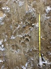 IMG_7351 (Curt's Back Room) Tags: coyotecreek highway85 highway101 tracks