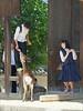 Collégiens en visite au Todai-ji (Nara, Japon) (dalbera) Tags: dalbera japon nara bouddhisme bouddha todaiji temple cerfs écoliers