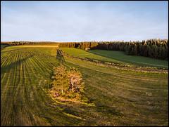 Mommos Pruppo (Jonas Thomén) Tags: aerial flygfoto mommospruppo field åker linda rock sten träd tree trees dji mavic air