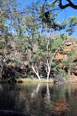 Galvans Pool (destinationsjourney) Tags: australia kimberley westernaustralia outback galvanspool pool tree trees rockpool swimminghole