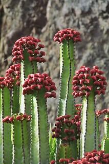 the cactus :)