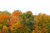 Forest view (hollyzade) Tags: nikond40 nikon nature tree trees forest orange green sky white autumn fall ontario canada